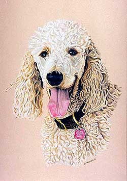 Harvey had such a personality. A laughing happy dog - Harvey was the first poodle portrait.