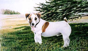 The owners of this Jack Russel have a large Thoroughbred farm in Mississauga, Ontario. Royce owned the place.