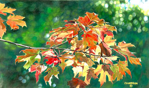 15x22 Color pencil painting of Outstanding colorful Maple leaves of fall Maple Lite