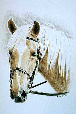 Belinda commissioned two pieces of her horse Paddington. He's pictured here with his bridle on.