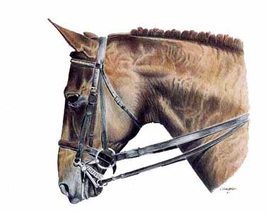 I had the good fortune to work with Canadian Dressage Team rider, Leslie Reid of Langley British Columbia. After immersing myself in the the farms environment, this portrait of her horse 'Seafox' just flowed onto paper.