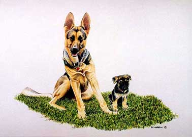 18 x24 inch color pencil painting of related Shepherd Dogs - Great Grandson Pup beside his Mentor