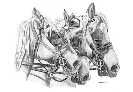 I continue to be fascinated by the gentleness and humbleness of work horses. Their gracefulness and devotion to their master inspires me. 'Team of Three' is the first in the series of heavy horses.