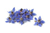 thebodydeli-borage-flowers
