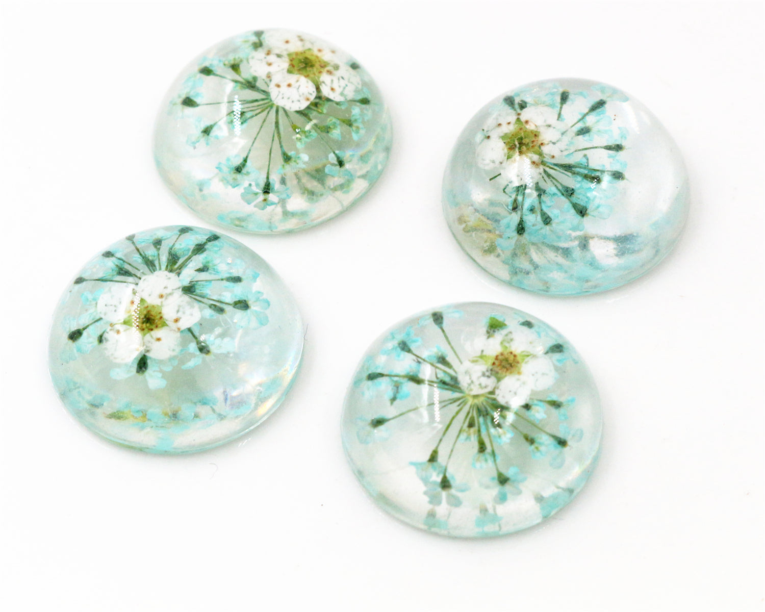 20mm Round Resin Cabochons Sky Blue Natural Dried White Chrysanthemum Flowers Cameo Fit Finding Setting