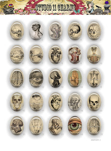 40x30, 18x25, 13X18 Resin Cameo LOW DOME Cabochon. Anatomy 2