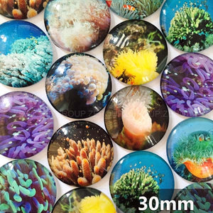 30mm 35mm Round Glass Cabochon Benthos Pictures Mixed Pattern Fit Cameo Base Setting