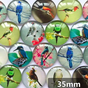 30mm 35mm Round Glass Cabochon Birds Pictures Mixed Pattern Fit Cameo Base Setting