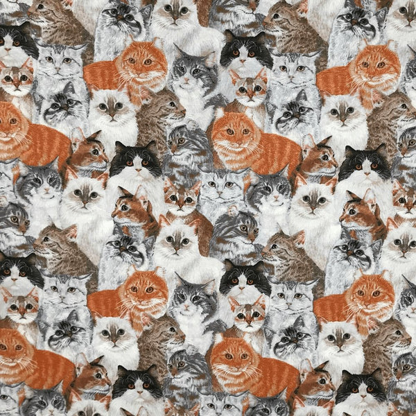 David Textiles, Allover Packed Cats Fabric - Multi - ineedfabric.com