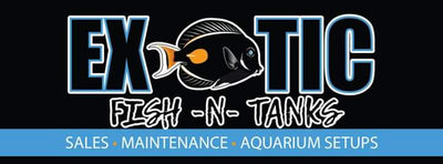 exoticfish-n-tanks