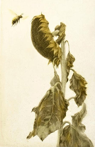 Mikio Watanabe's 'Fin D'été.' Color mezzotint of a drooping sunflower and a bee.