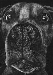 Kirsten Flaherty's 'Pit Bull II.' Image of the snout and face of a pit bull in black and white.