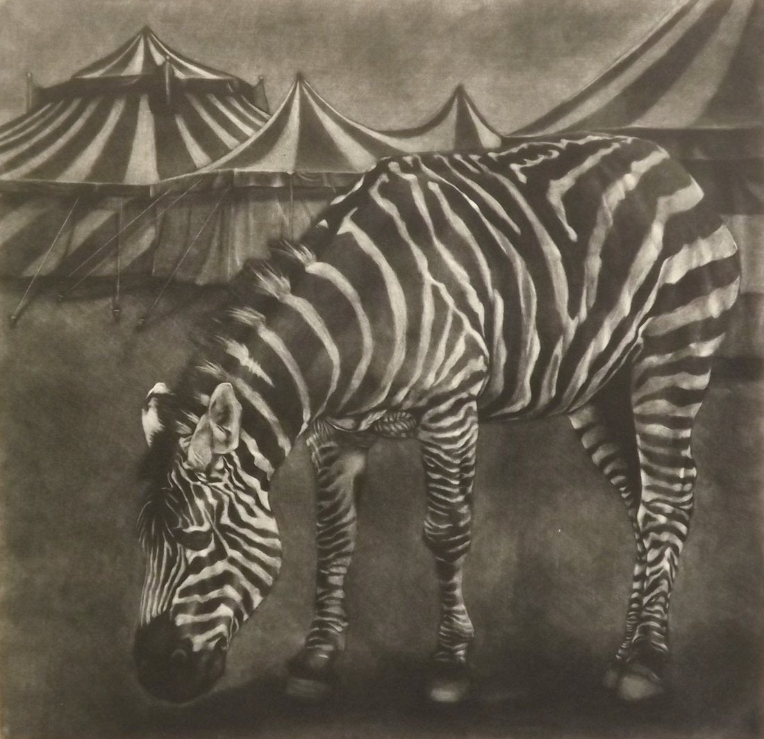 Aoife Layton's 'Habitat.' Black and white mezzotint of a zebra in front of striped circus tents.
