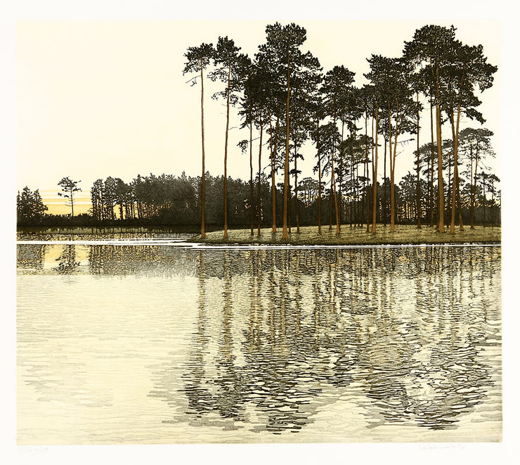 Pine Light by Phil Greenwood - Davidson Galleries