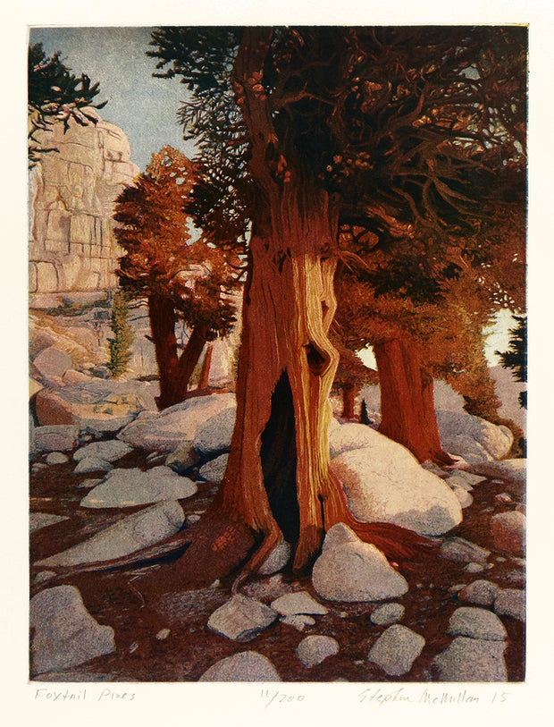 Foxtail Pines by Stephen McMillan - Davidson Galleries