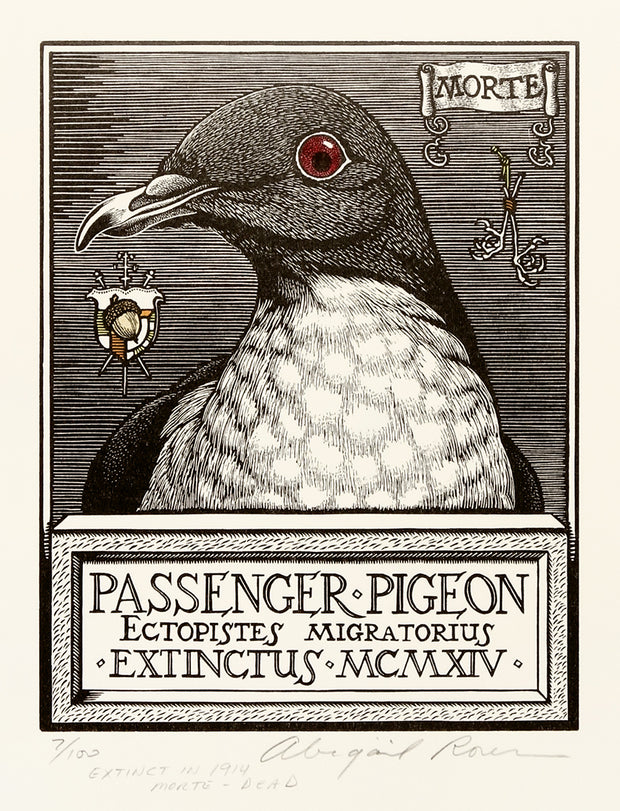 Passenger Pigeon by Abigail Rorer - Davidson Galleries