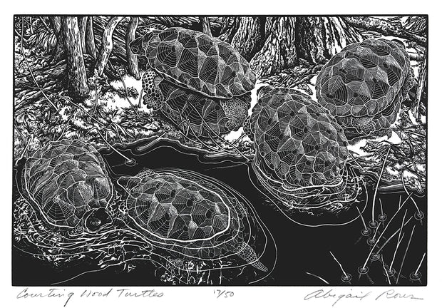 Courting Wood Turtles by Abigail Rorer - Davidson Galleries