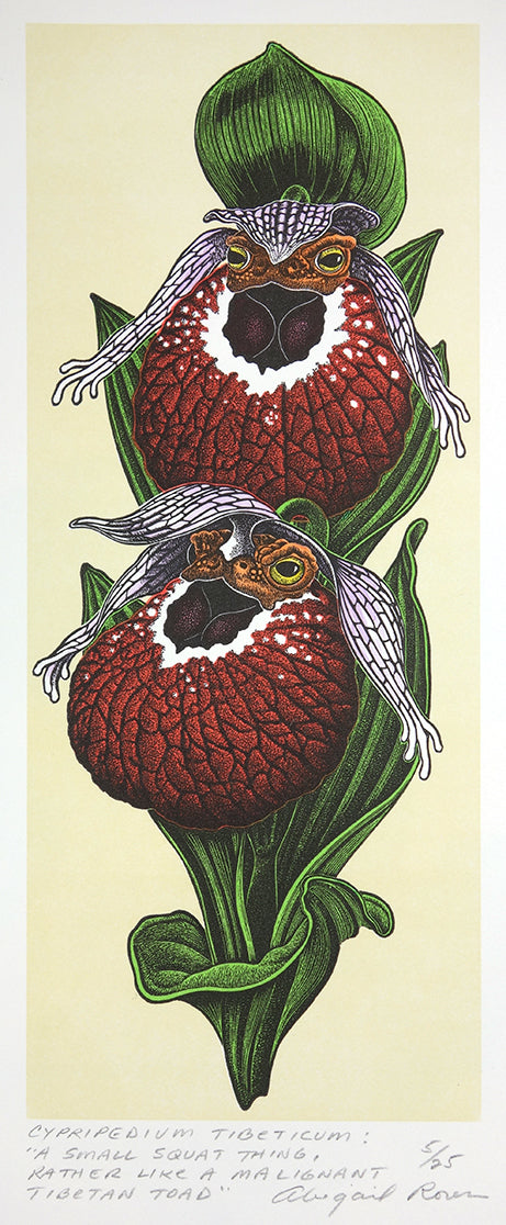 Cypripedium tibeticum by Abigail Rorer - Davidson Galleries