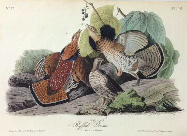 Ruffed-Grouse by John James Audubon - Davidson Galleries