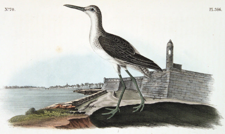 Greenshank by John James Audubon - Davidson Galleries
