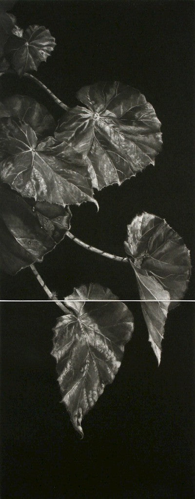 Begonia by Judith Rothchild - Davidson Galleries