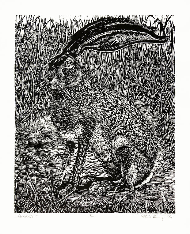 Jackrabbit by Marit Berg - Davidson Galleries