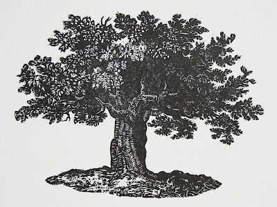 Bewick's Tree by Carl V. Montford - Davidson Galleries