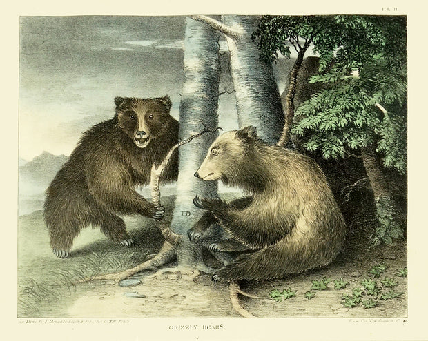 Grizzly Bears by Naturalist Prints (Animals) - Davidson Galleries