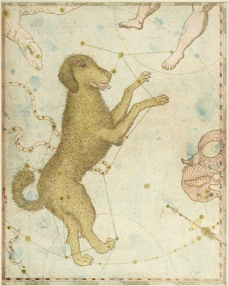 Canis Major by Tallmadge Doyle - Davidson Galleries