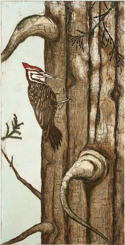 Pileated Woodpecker by Tallmadge Doyle - Davidson Galleries