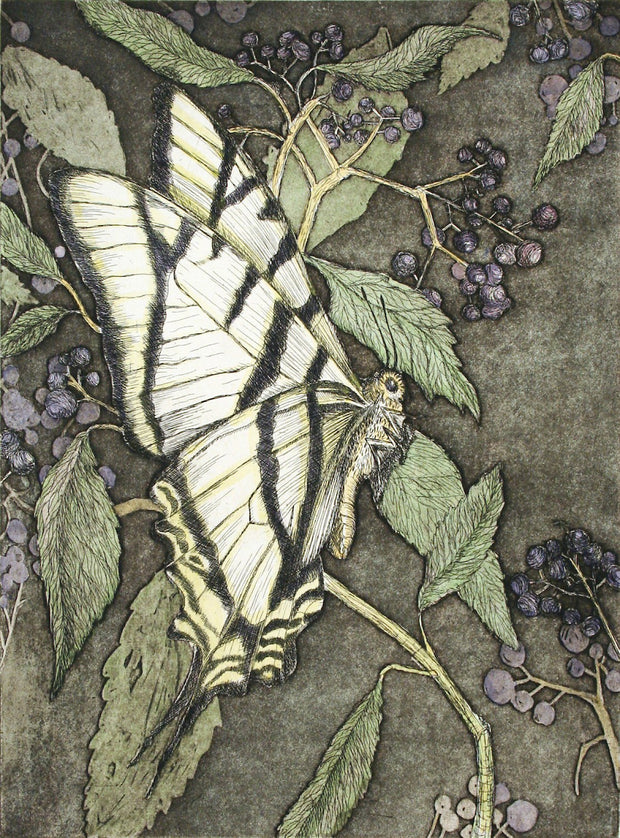 Swallowtail with Elderberry by Tallmadge Doyle - Davidson Galleries
