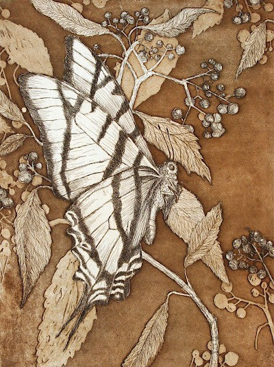 Swallowtail with Elderberry (not colored) by Tallmadge Doyle - Davidson Galleries