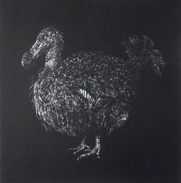 Dodo by Trevor Foster - Davidson Galleries