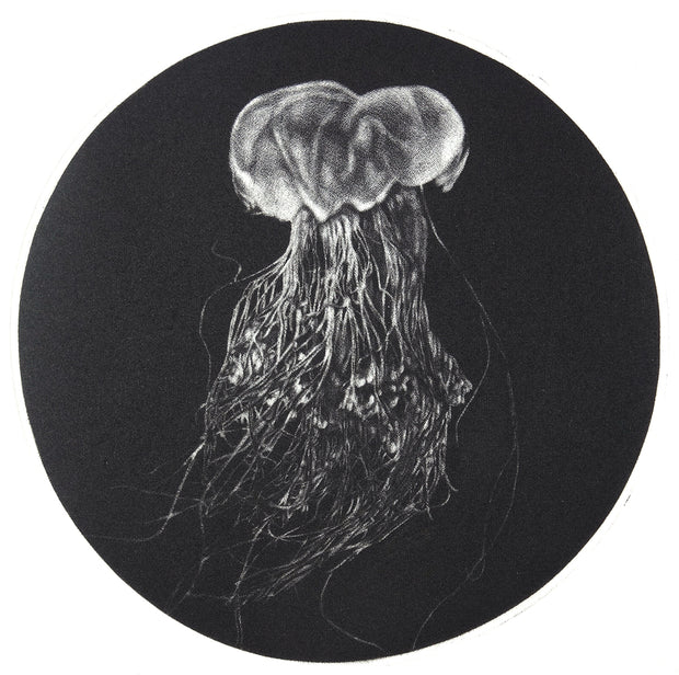 Lions Mane Jellyfish by Trevor Foster - Davidson Galleries