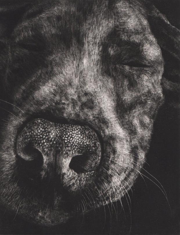 Dog Portrait by Kirsten Flaherty - Davidson Galleries