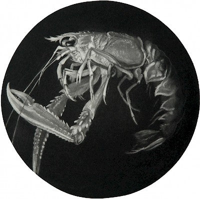 Langoustine (Fantome Rose) by Judith Rothchild - Davidson Galleries