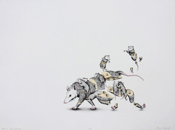 Opossum Deconstruction by Emmy Lingscheit - Davidson Galleries