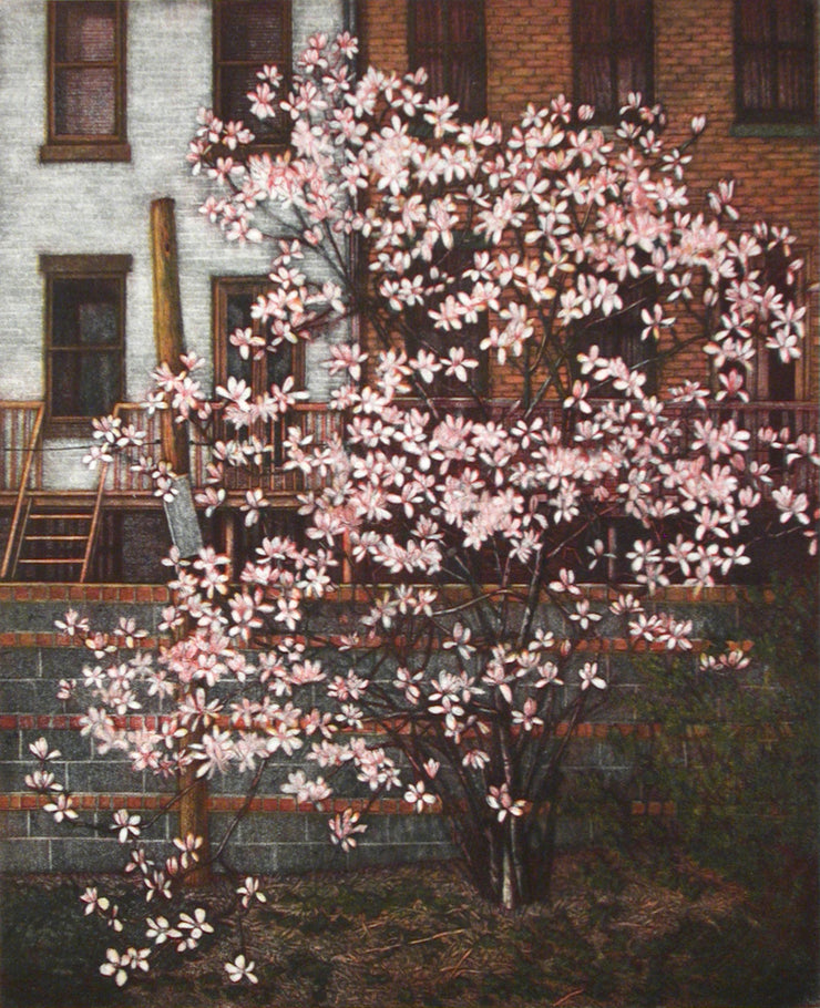 Magnolias by Frederick Mershimer - Davidson Galleries