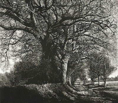 Winter Oak Walk by Martin Mitchell - Davidson Galleries