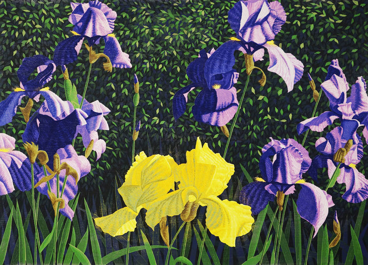 Bearded Iris by Gordon Mortensen - Davidson Galleries