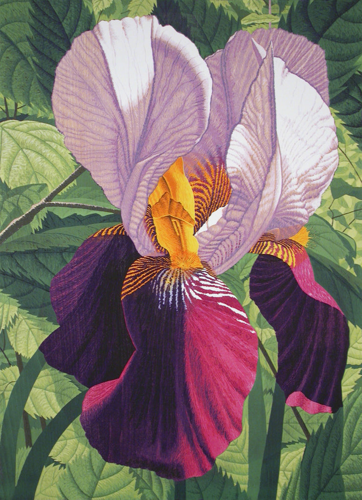 Double Iris by Gordon Mortensen - Davidson Galleries