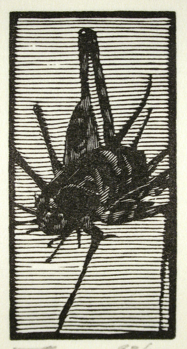 Cricket from Bestiaire D'amour by Barry Moser - Davidson Galleries