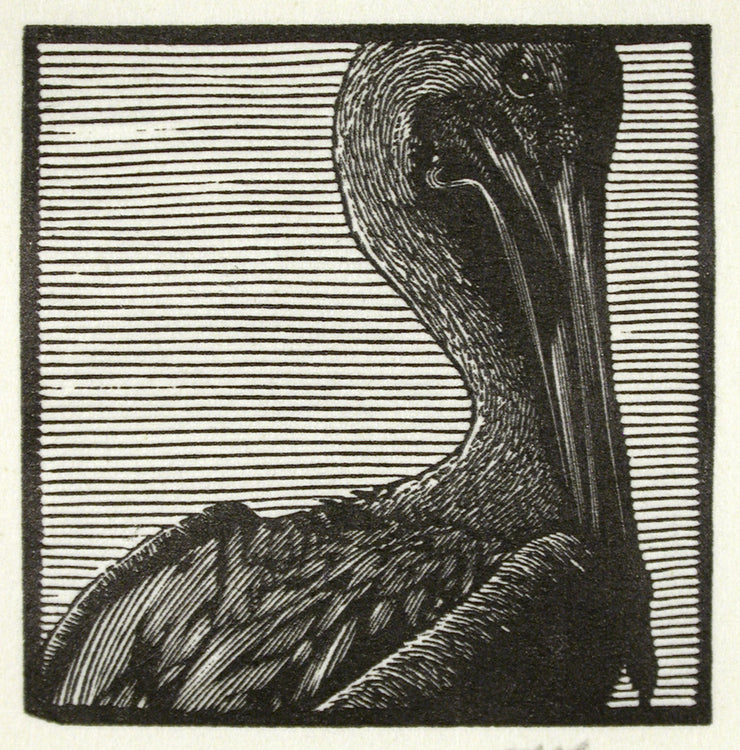 Pelican from Bestiaire D'Amour by Barry Moser - Davidson Galleries