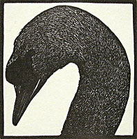 Swan from Bestiaire D'Amour by Barry Moser - Davidson Galleries