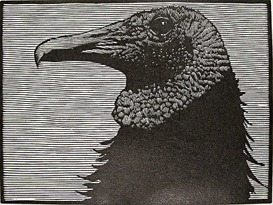 Vulture #2 by Barry Moser - Davidson Galleries