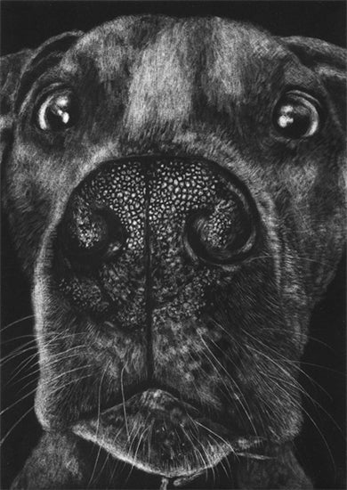 Pit Bull II by Kirsten Flaherty - Davidson Galleries