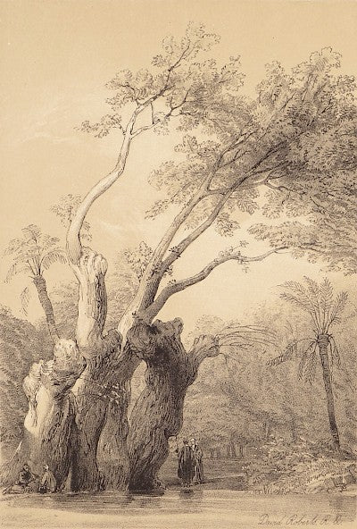 The Holy Tree of Metereeah Plate 227 by David Roberts - Davidson Galleries