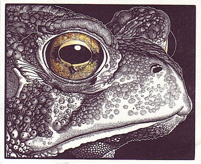 Bufo the First by Abigail Rorer - Davidson Galleries