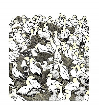 Gannet Colony by Abigail Rorer - Davidson Galleries