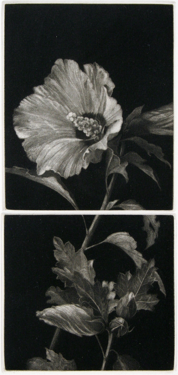 Hibiscus by Judith Rothchild - Davidson Galleries